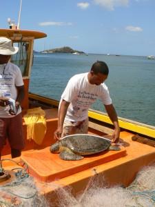 Mesure d'une tortue prise dans un filet par un pêcheur participant au programme.