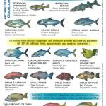 Espèces interdites à la pêche et la vente.