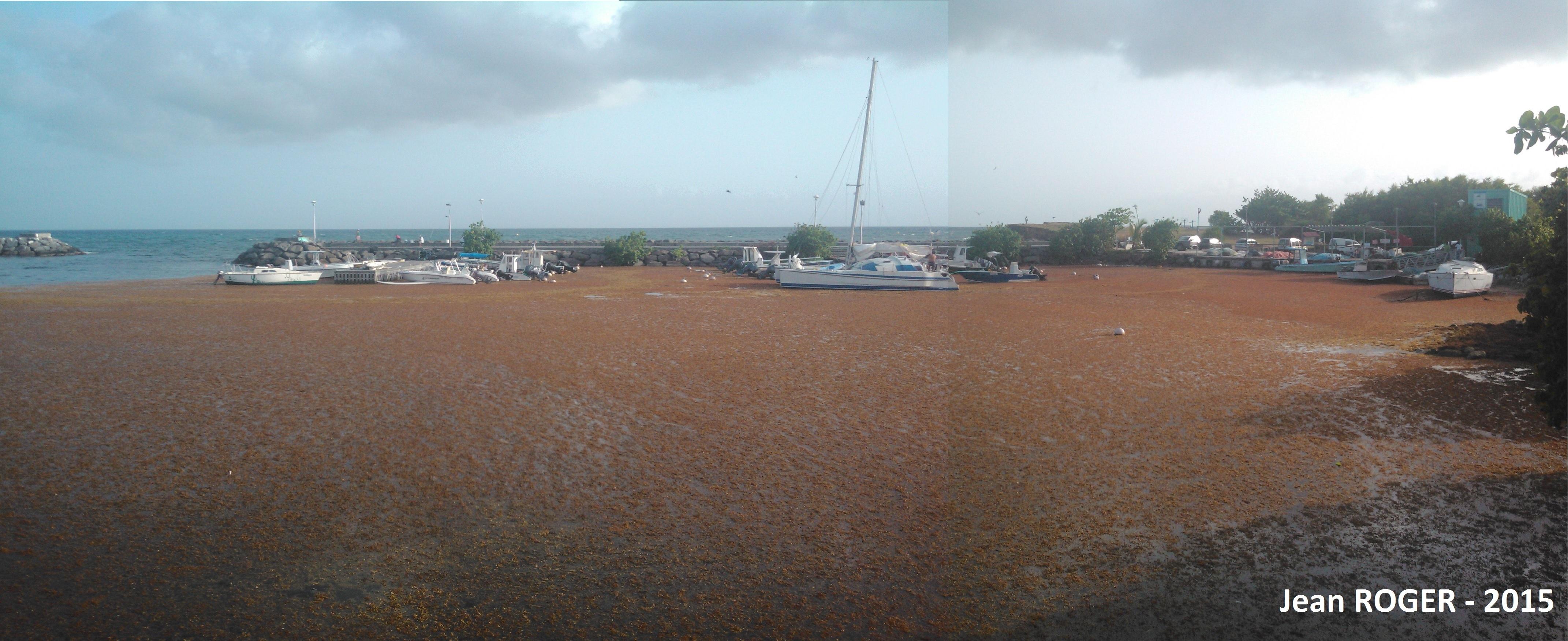 Le port de St Felix rempli de sargasses le 28 avril 2015.