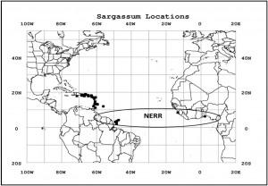 Localisation des échouages de sargasses et position de bancs/lignes de sargasses repérés en mer par avion (carrés noirs). L'ellipse positionne grossièrement la zone de convergence intertropicale (Z-CIT) (source: Johnson et al., 2012).